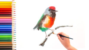 artist junior tv - how to paint bird using watercolor