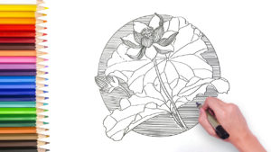 learn how to draw lotus