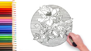 learn how to draw peony